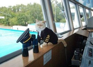 gato marinero 3