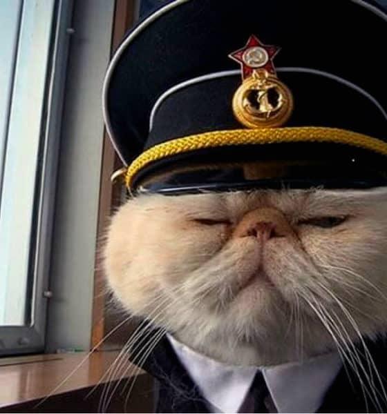 Portada.Gato capitán de un barco.Foto.Mott