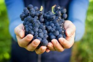 Cuna de tierra Gto uvas
