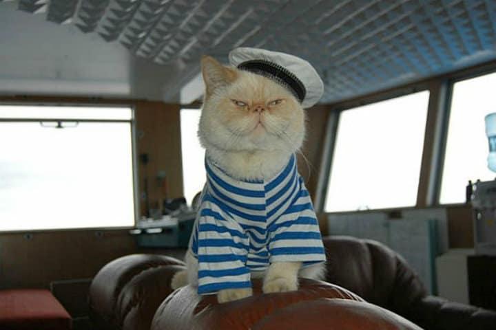 gato marinero