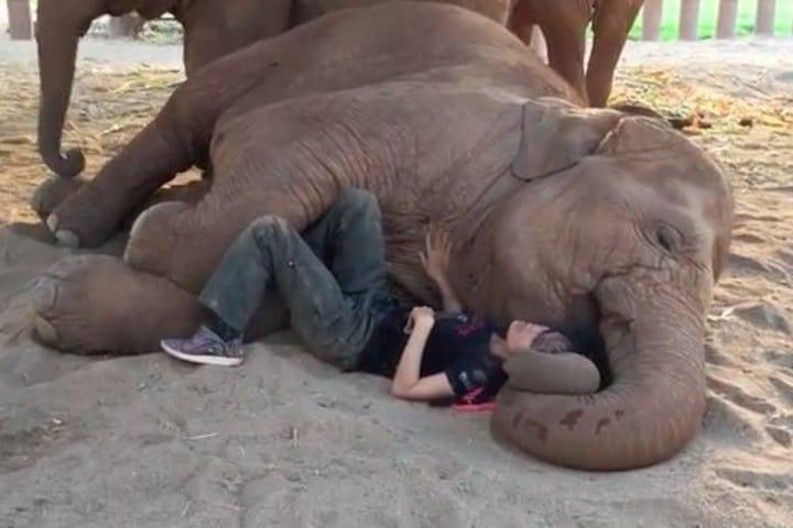Canción de cuna para elefante