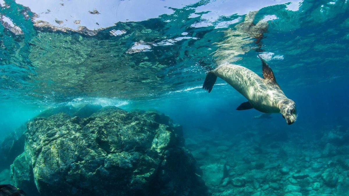 La Paz Baja California Sur Foto: Lobos marinos