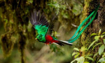 Portada Quetzal foto Sunvil