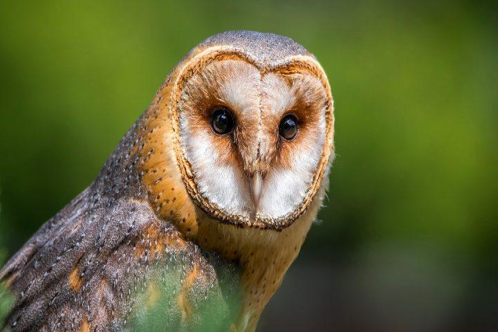 Con una gran variedad de especies. Foto Lubos Houska.
