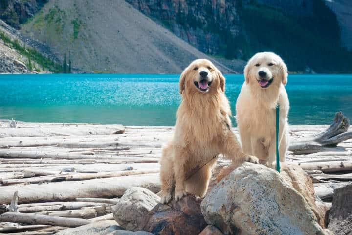 Debes viajar con tu mejor amigo, nunca lo olvidarás.Foto.Julian Schiemann.2