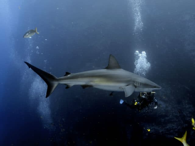 Islas Revillagigedo Foto Chuck Gerlovick 02
