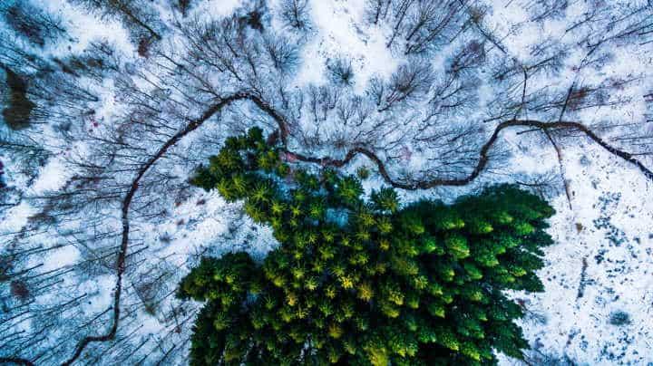 Kalbyris-forest-Denmark-by-mbernholdt