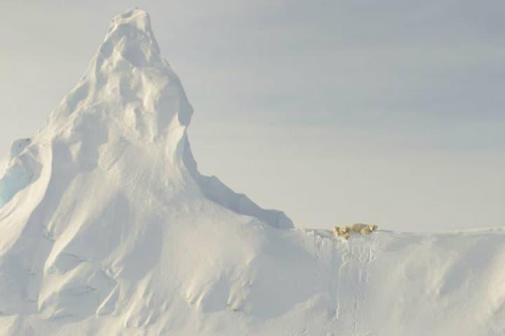 Osos en el iceberg.Foto.John Rollins.1