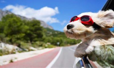 Portada.Perro como compañero de viaje.Foto.Convivir Press