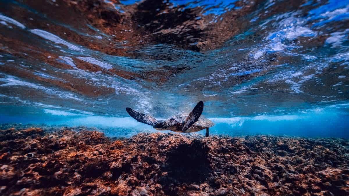 Portada.Ruta de la tortuga marina en Oaxaca.Foto.Pixabay