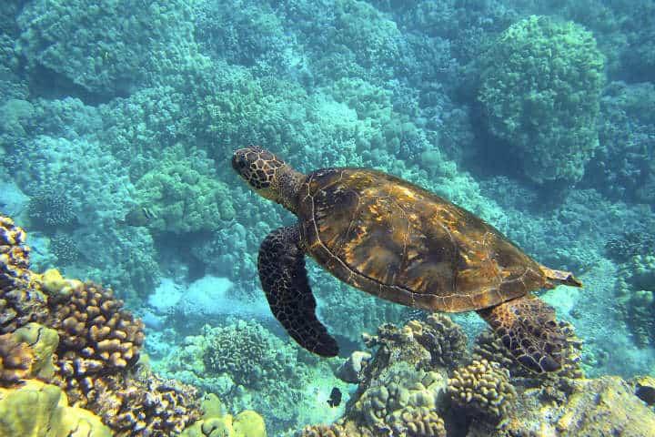 Ruta de la tortuga marina en Oaxaca.Foto.Bphelan.1