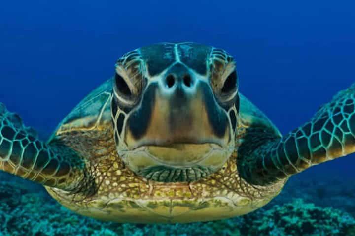 Ruta de la tortuga marina en Oaxaca.Foto.Oaxaca Lindo.11