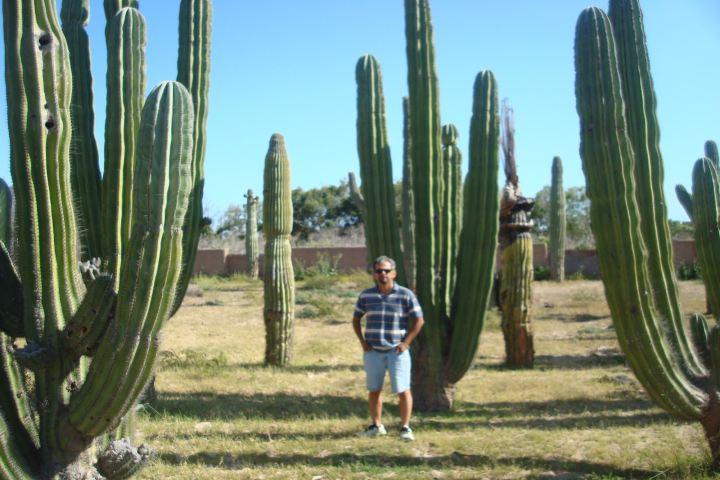 San Carlos Fortin blogger Foto: Bosque de Sahuaros en Sonora