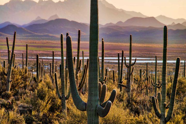 Travel Sahuaros Foto: Desierto en Sonora