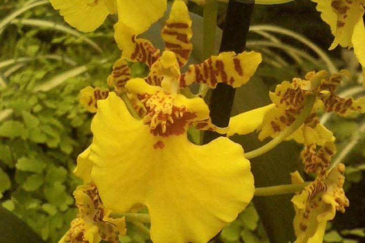"""San Pancho orquideario """"Lo de Perla"""". Foto: Orquídeas"""