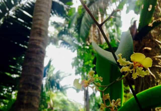 San pancho orquideario lo de perla