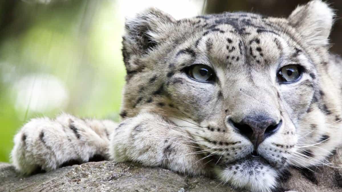 Test de Animales en peligro de extinción. Foto: muyinteresante.es
