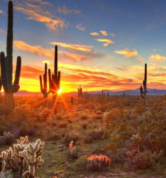 Vanidades Foto: Bosque de Sahuaros en Sonora