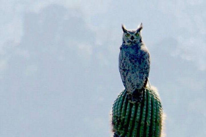 El sol de México Foto: Sahuaros en Sonora