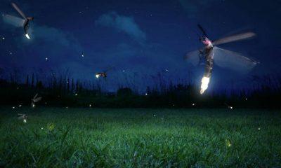 santuario de luciérnagas en tlaxcala