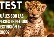 test especies en peligro de extinción mexico