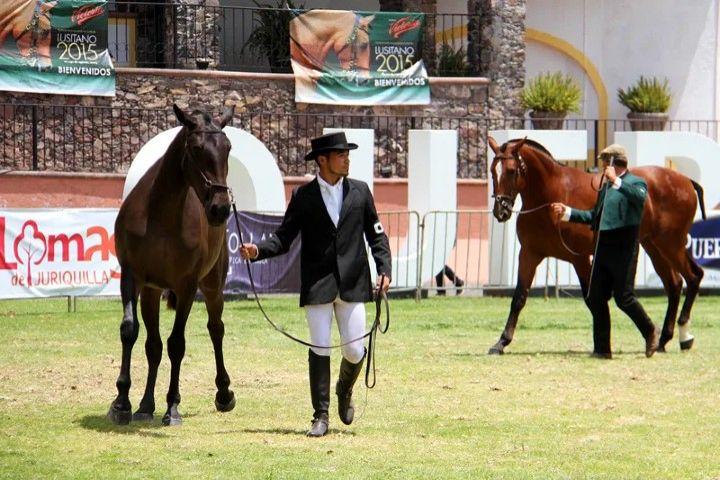 Festival Internacional del Caballo Lusitano en Querétaro. Foto: Noticias Querétaro