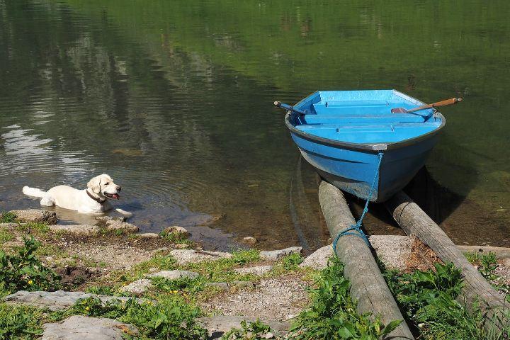 Boat dog _Un divertido video_. Foto Hans Braxmeier.