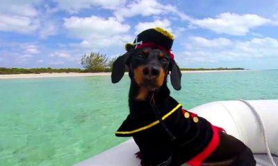 Crusoe navegando. Foto: Crusoe the Celebrity Dachshund