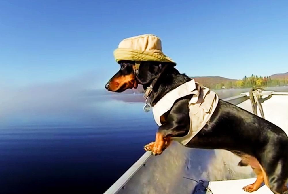 Crusoe navegando. Foto: Sr. Perro la guía para animales urbanos.