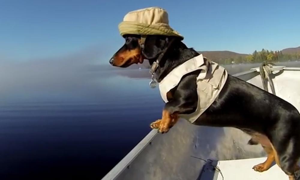 Crusoe navegando. Foto: Sr. Perro, la guía para animales urbanos.