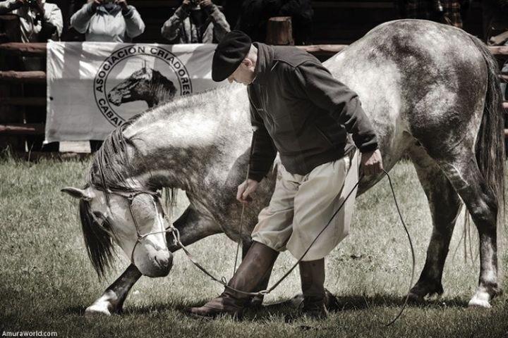 Gustavo Mirabal Castro Foto: Festival Internacional del Caballo Lusitano