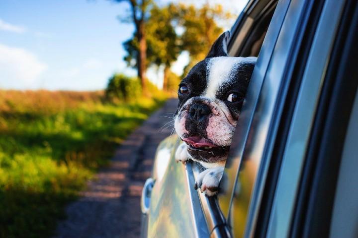 Servicio Cuida Mi Mascota. Foto Pexels.