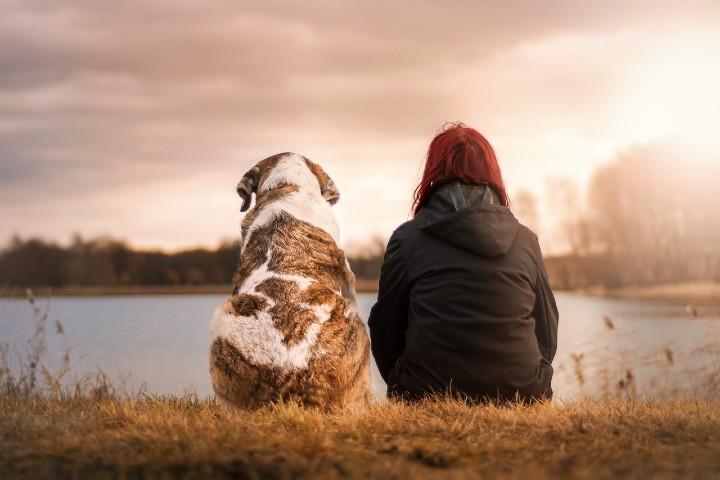 Servicio Cuida Mi Mascota. Foto Suen Lachmann.