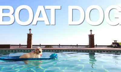 video boat dog. Foto por YouTube.