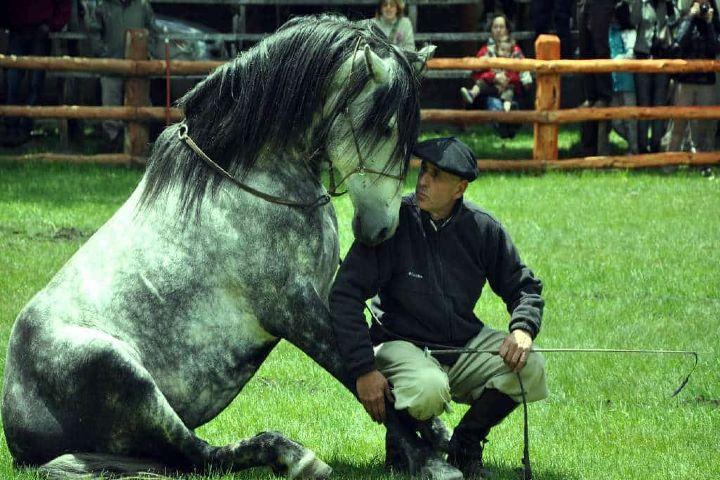 Foto Archivo: Festival Internacional del Caballo Lusitano