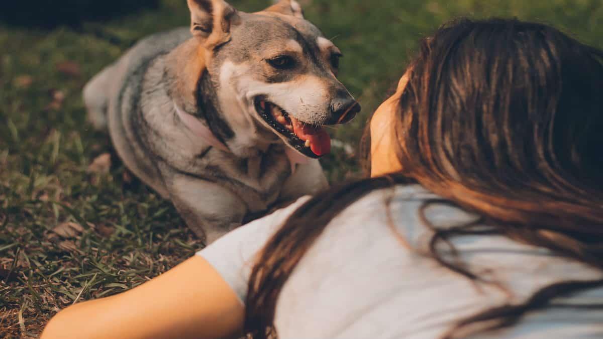 Servicio cuida mi mascota. Foto por housfy.