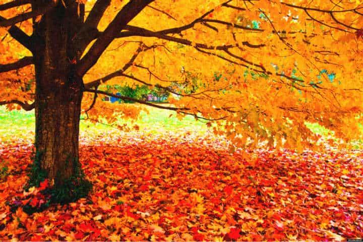otoño edmonton