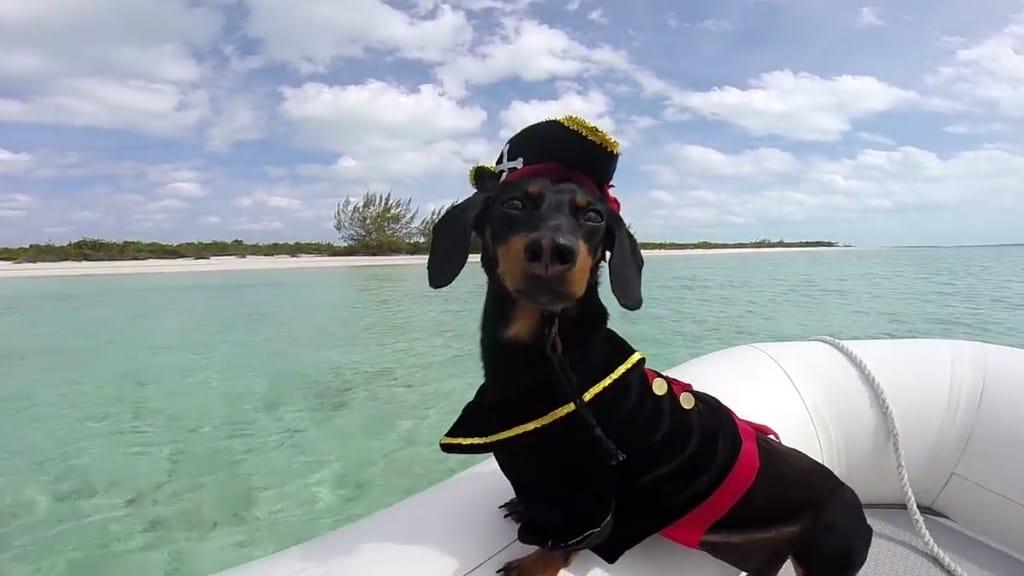 perro salchicha navegador crusoe