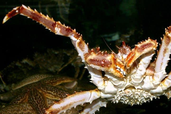 red-king-crab-79935_1280 (1)