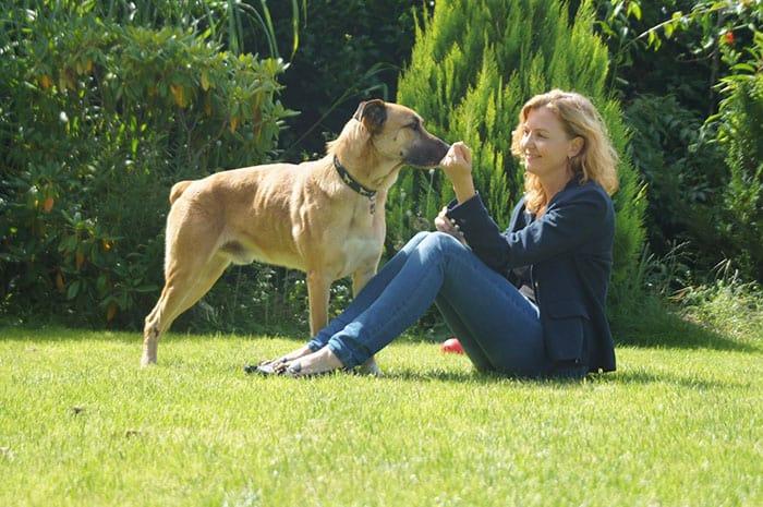 sobrecargo adopta perro (1)