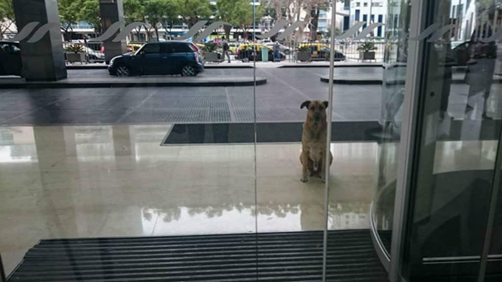 sobrecargo adopta perro (3)