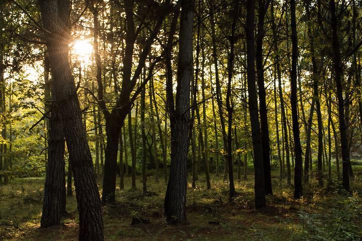 Bosque de pino. Foto Pedro Luna Guillen