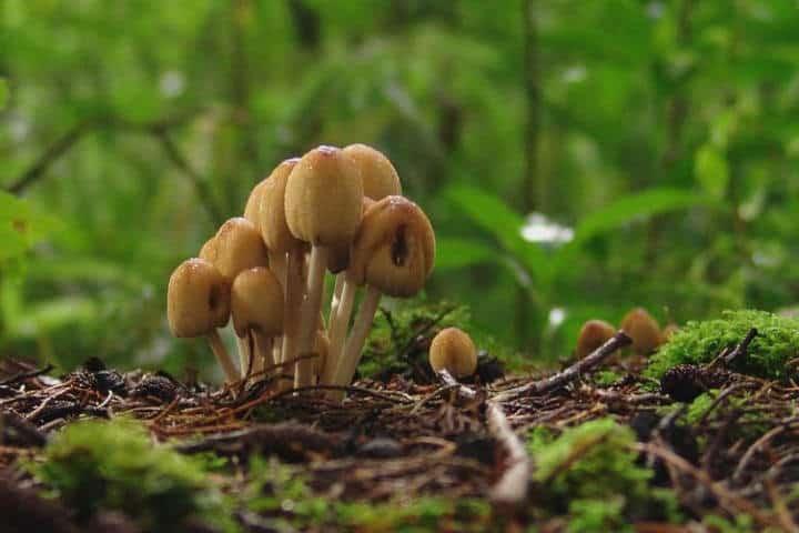 hongos poas