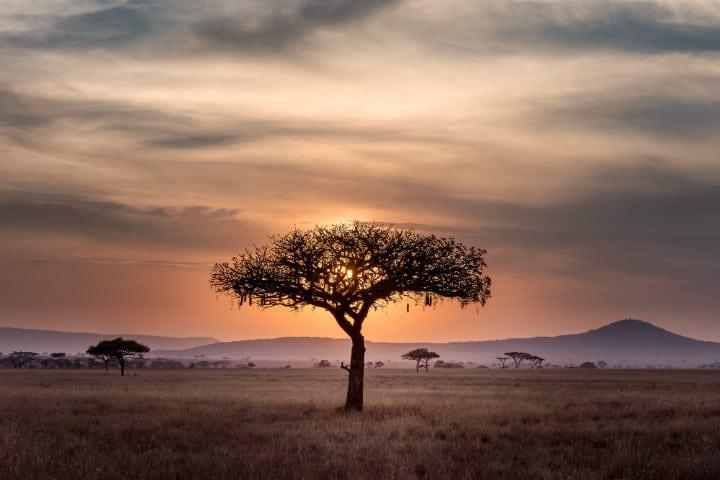En el precioso parque de Serengueti se lleva a cabo la gran migración Foto Hu Chen