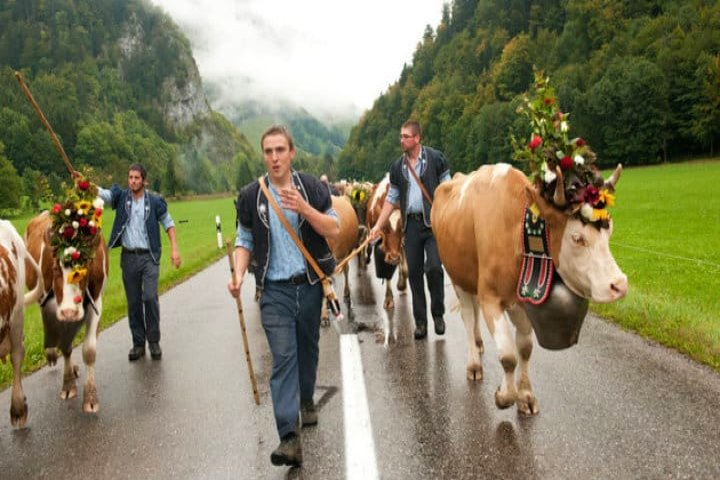 Fiesta de las vacas en Suiza. Foto Archivo.