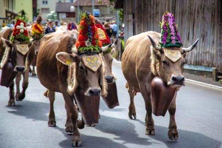 Fiesta de las vacas en Suiza. Foto Natalia Volkova2.
