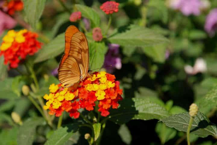 Mariposas el cielo tamaulipas verde Foto Armando Aguayo R
