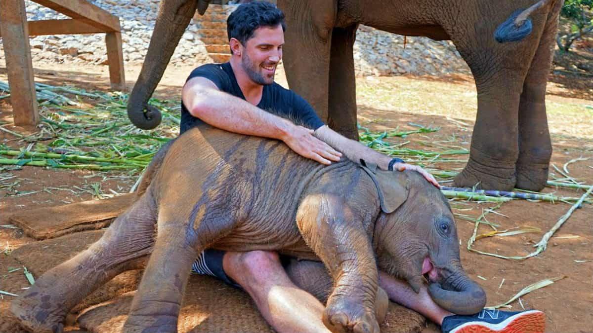 Video elefante bebé en Tailandia Foto Gareth Leonard