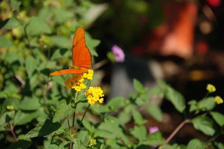 mariposas el cielo tamauipas naranja Foto Armando Aguayo