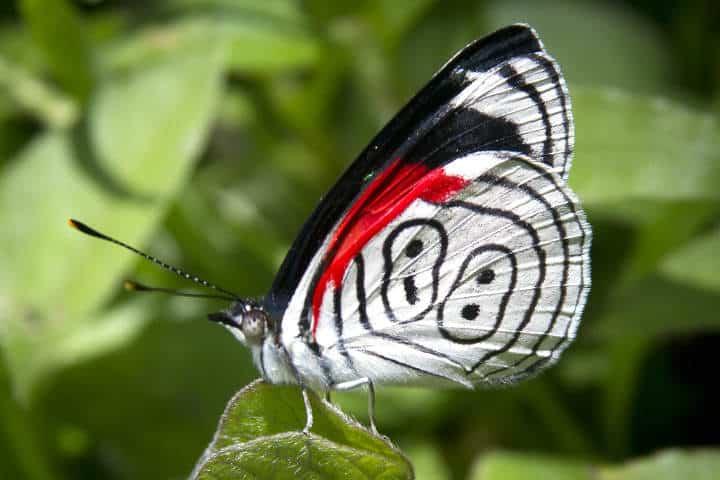 mariposas el cielo tamaulipas 88
